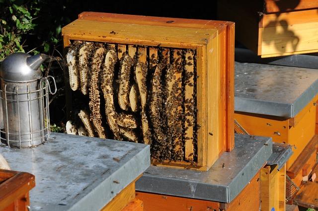plásty na med