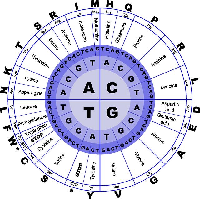 dna aminokyseliny
