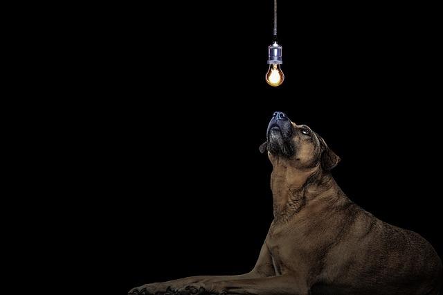 pes pod žárovkou